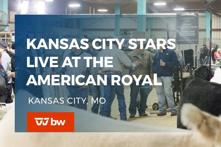 Kansas City Stars LIVE at the American Royal - Missouri