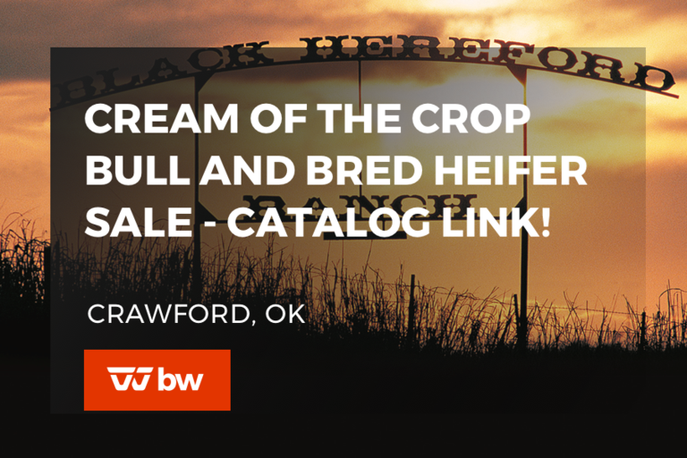 Cream of the Crop Bull and Bred Heifer Sale - Listing Only - Oklahoma