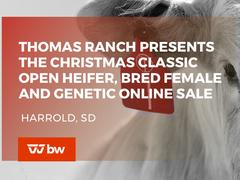 Thomas Ranch Presents The Christmas Classic Open Heifer, Bred Female and Genetic Online Sale - South Dakota