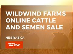 Wildwind Farms Online Cattle and Semen Sale - Nebraska