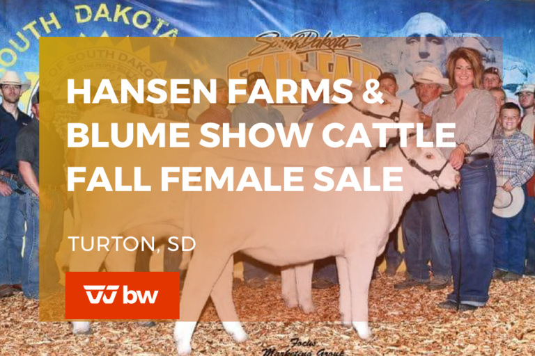 Hansen Farms & Blume Show Cattle Fall Female Online Sale - South Dakota