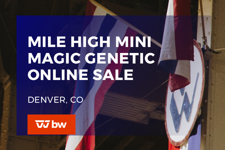 Mile High Mini Magic Genetic Sale - Colorado