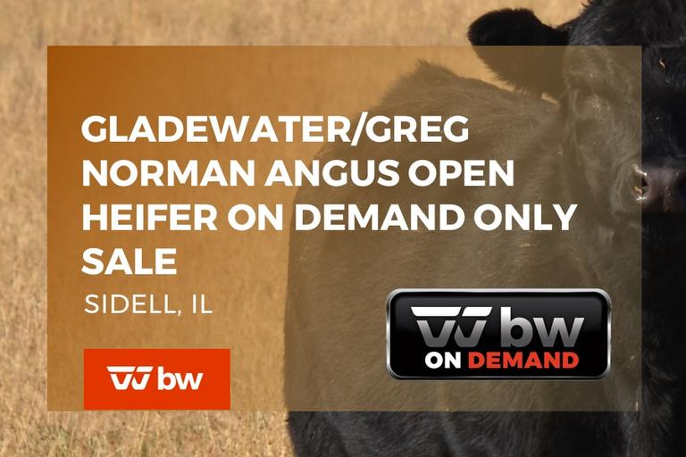 Gladewater/Greg Norman Angus Open Heifer On Demand Only Sale - Illinois