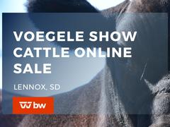 Voegele Show Cattle Online Sale - South Dakota