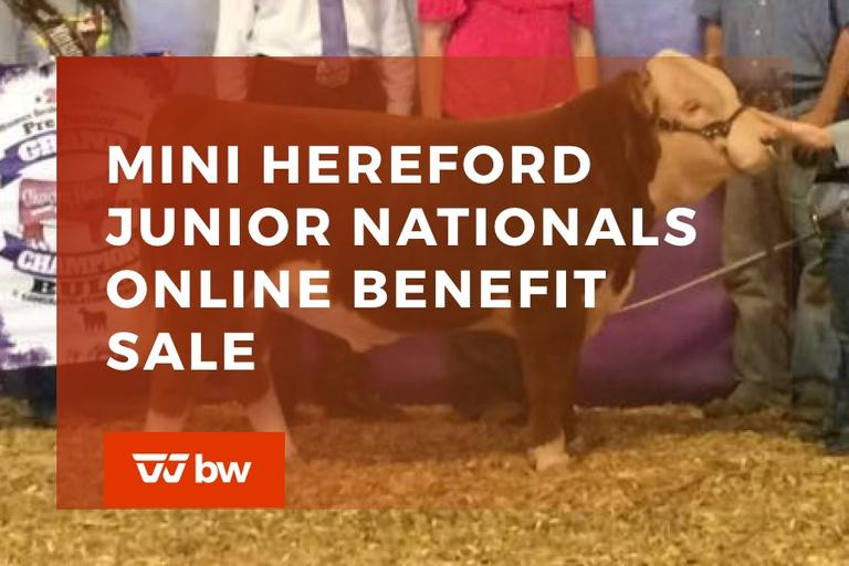 Mini Hereford Junior Nationals Online Benefit Sale