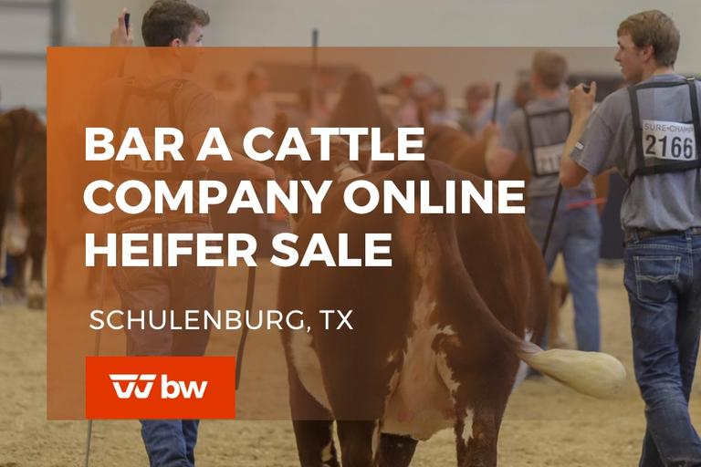 Bar A Cattle Company Online Hereford Heifer Sale - Texas
