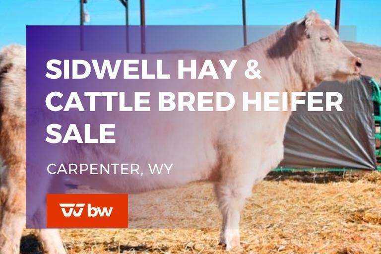 Sidwell Fort Worth Stock Show Commercial Female Sale Consignments (VIEW ONLY)