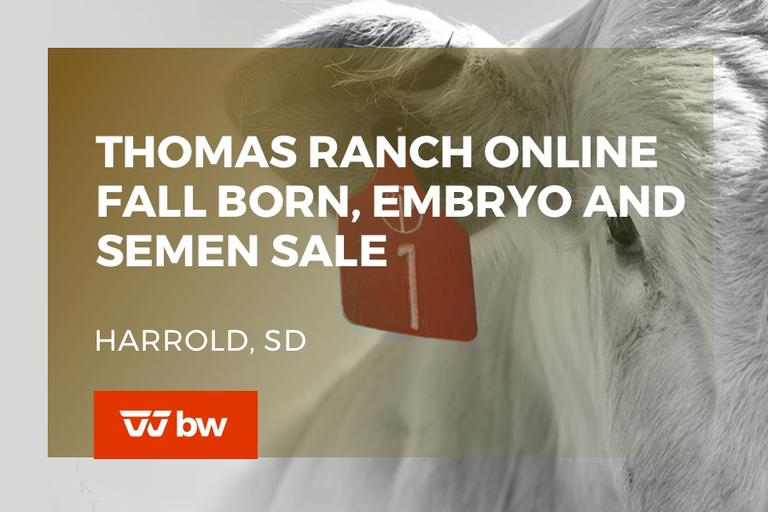 Thomas Ranch Online Fall Born, Embryo and Semen Sale - South Dakota