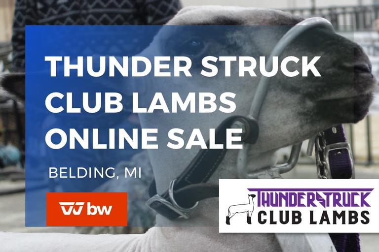 Thunder Struck Club Lambs Online Sale - Michigan