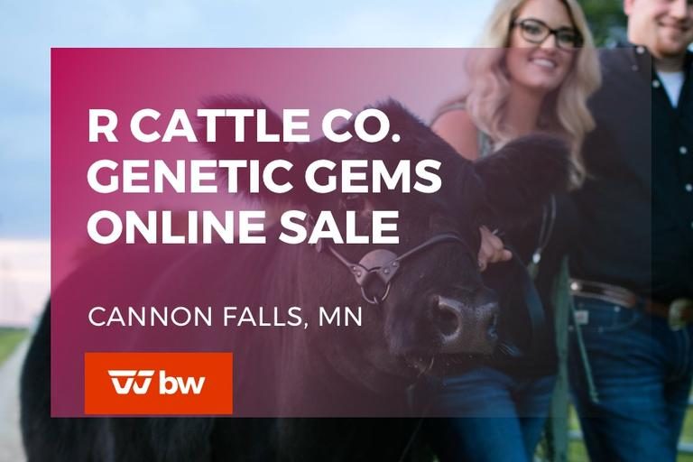 R Cattle Co Genetic Gems Online Sale - Minnesota