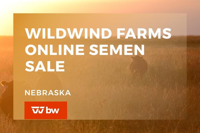 Wildwind Farms Online Semen Sale - Nebraska