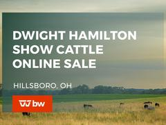 Dwight Hamilton Show Cattle Online Sale - Ohio