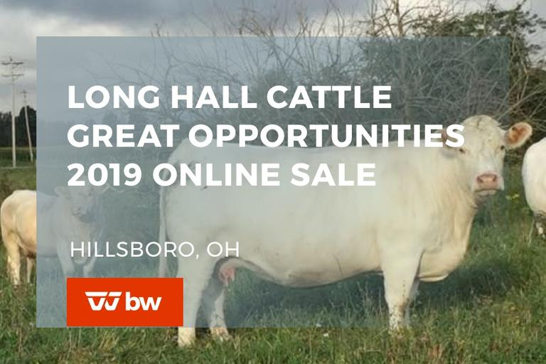 Long Hall Cattle Great Opportunities 2019 Online Sale - Ohio