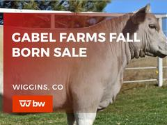 Gabel Farms Fall Born Online Sale - Colorado