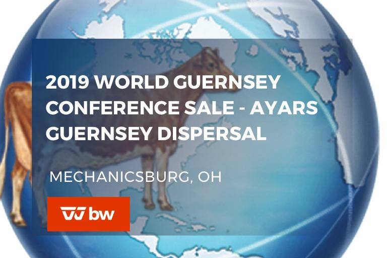 2019 WORLD Guernsey Conference Sale - Ayars Guernsey Dispersal - Ohio