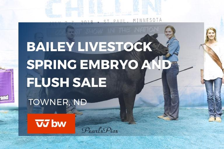 Bailey Livestock Spring Embryo and Flush Online Sale - North Dakota