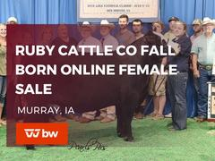 Ruby Cattle Co. Fall Born Female and Genetics Sale - Iowa