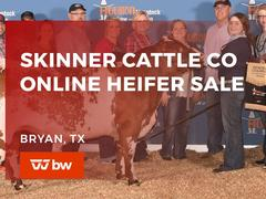 Skinner Cattle Co. Online Heifer Sale - Texas