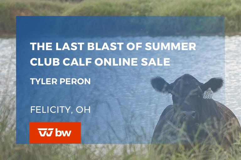 The Last Blast of Summer Club Calf Online Sale - Ohio