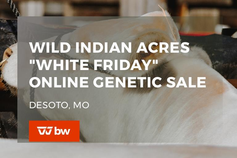 "Wild Indian Acres ""White Friday"" Online Genetic Sale - Missouri"