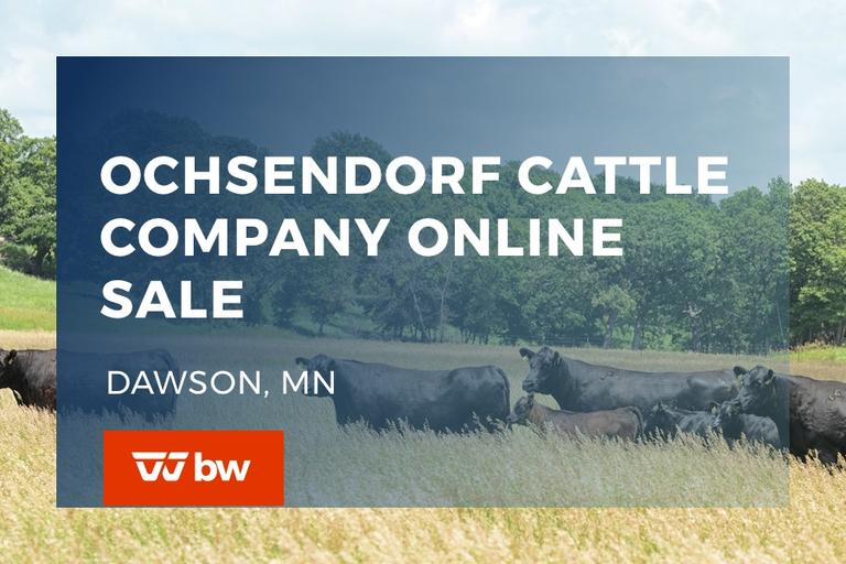 Ochsendorf Cattle Online Sale - Minnesota
