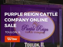 Purple Reign Cattle Co Online Sale - Illinois