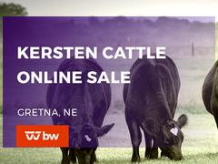 Kersten Cattle Online Sale - Nebraska