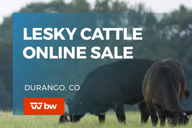 Lesky Cattle Online Sale - Colorado