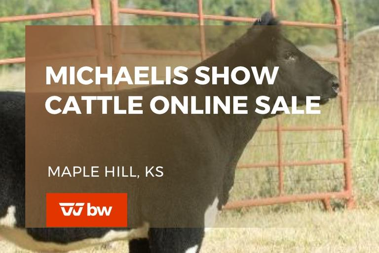 Michaelis Show Cattle Online Sale - Kansas