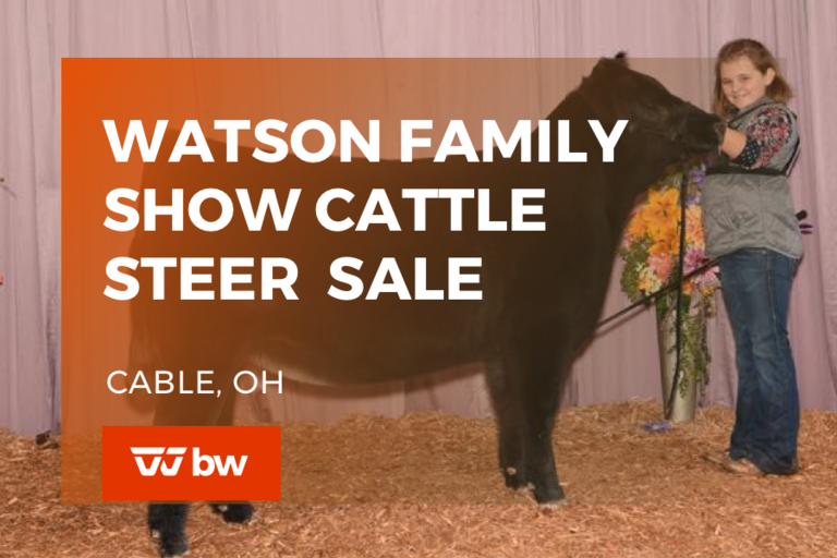 Watson Family Show Cattle Steer Sale - Ohio