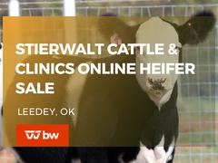 Stierwalt Cattle & Clinics Online Heifer Sale - Oklahoma