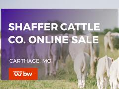 Shaffer Cattle Company Online Sale - Missouri