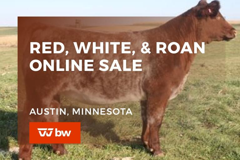 Red, White, & Roan Online Sale