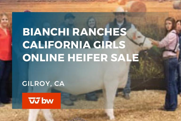 Bianchi Ranches California Girls Online Heifer Sale - California
