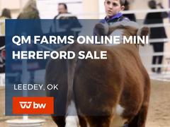 QM Farms Online Mini Hereford Sale - Oklahoma