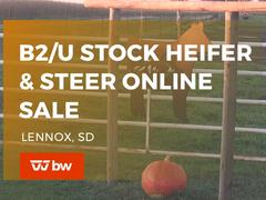 B2/U Stock Heifer & Steer Online Sale - South Dakota