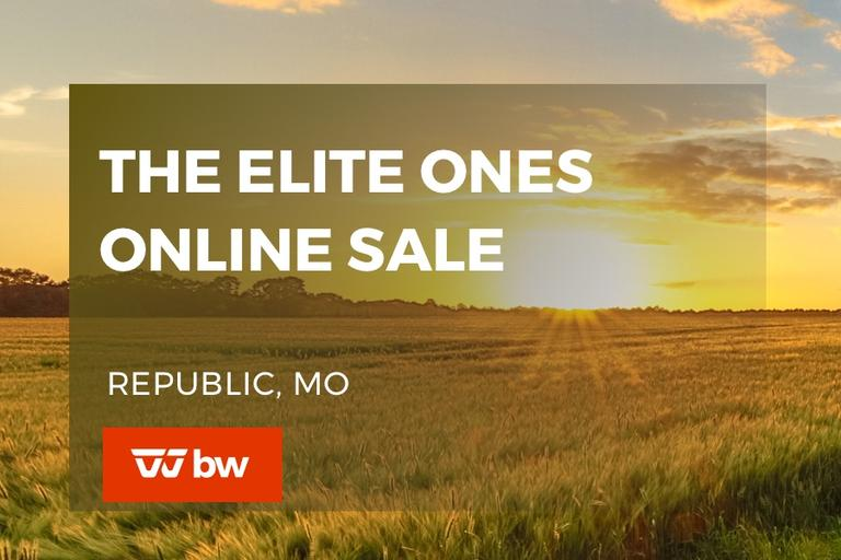 The Elite Ones Online Sale - Missouri