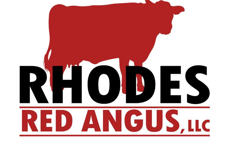 Rhodes  Red Angus