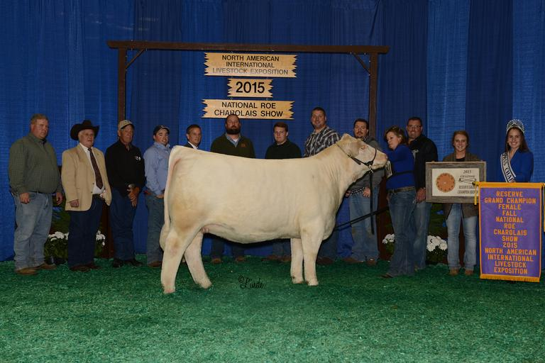 RBM TR Rhinestone Z38 x Ms Kennedy Embryos