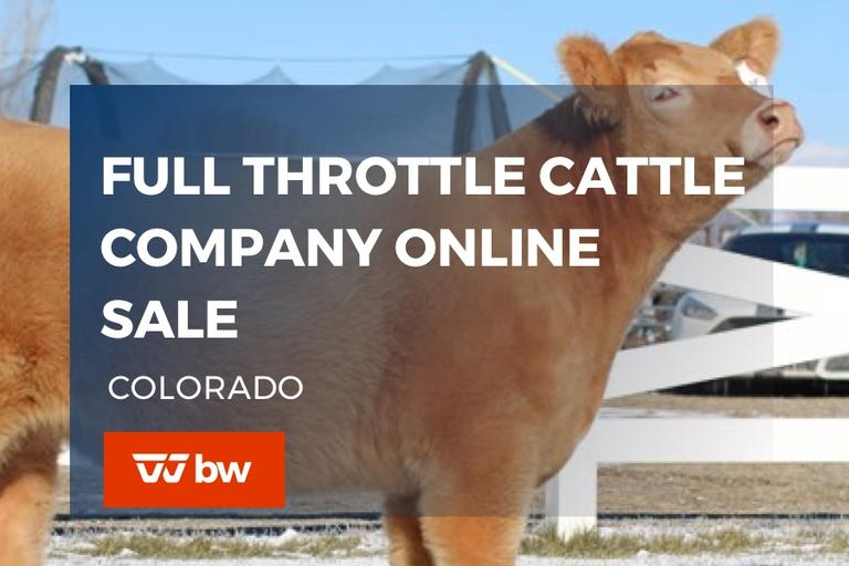 Full Throttle Cattle Company Online Sale - Colorado