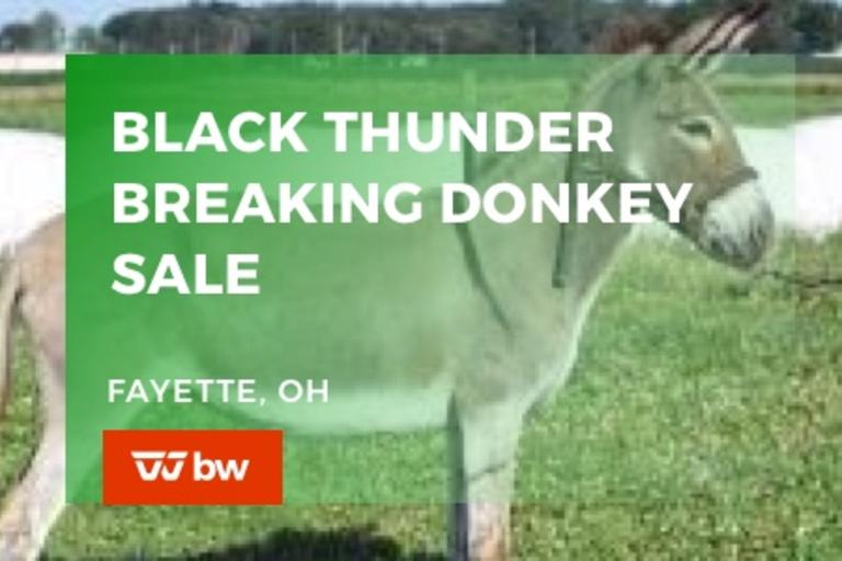 Black Thunder Breaking Donkeys Online Sale