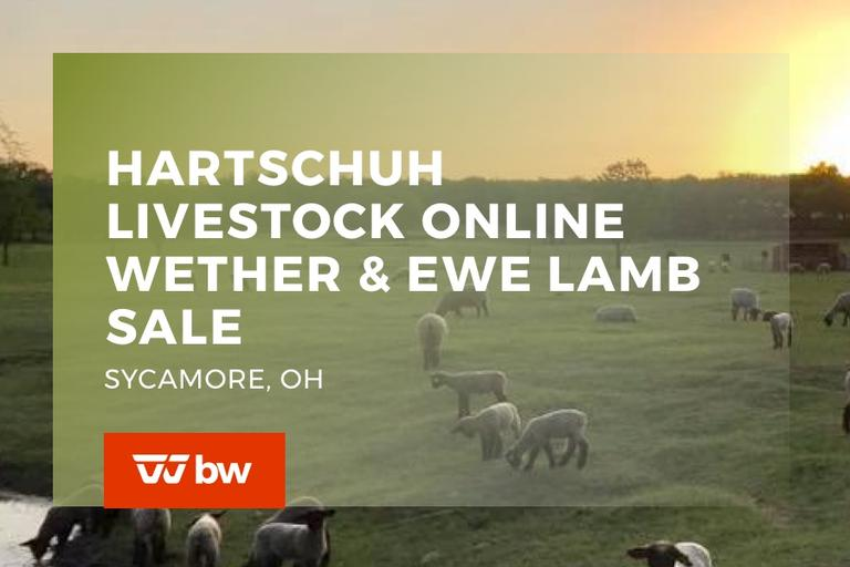 Hartschuh Livestock Online Wether and Ewe Lamb Sale - Ohio