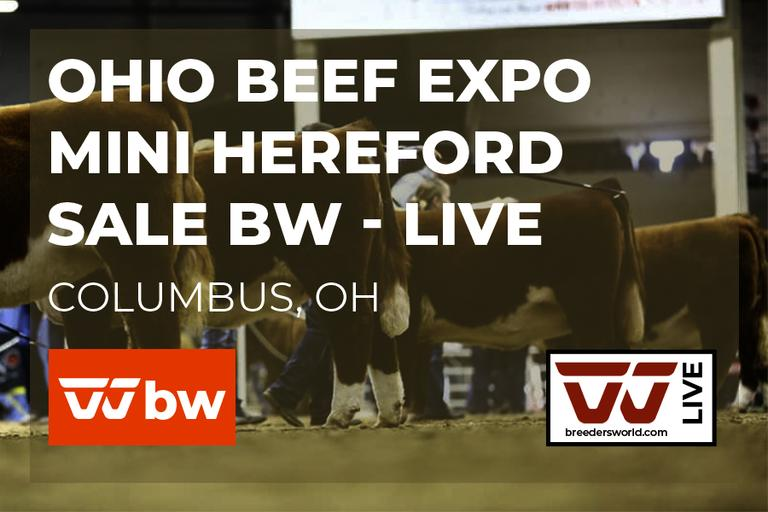 Ohio Beef Expo Mini Hereford - BW Live