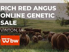 Rich Red Angus Online Genetic Sale - Iowa