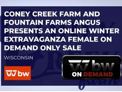 Coney Creek Farm and Fountain Farms Angus Presents an Online Winter Extravaganza Female and Genetics Sale - Wisconsin
