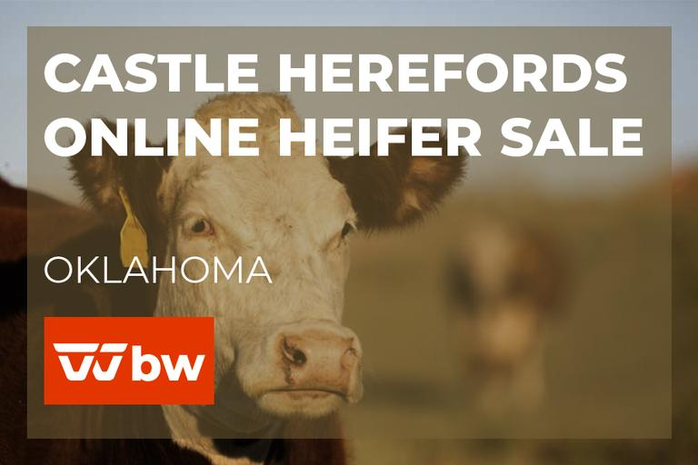 Castle Herefords Online Heifer Sale - Oklahoma
