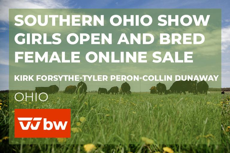 Southern Ohio Show Girls Open and Bred Female Online Sale - Ohio