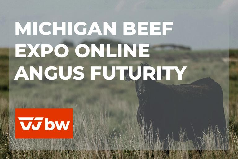 Michigan Beef Expo Online Angus Futurity Female Sale