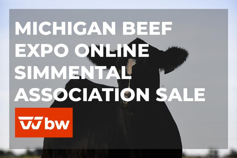 Michigan Beef Expo Online Simmental Association Female Sale