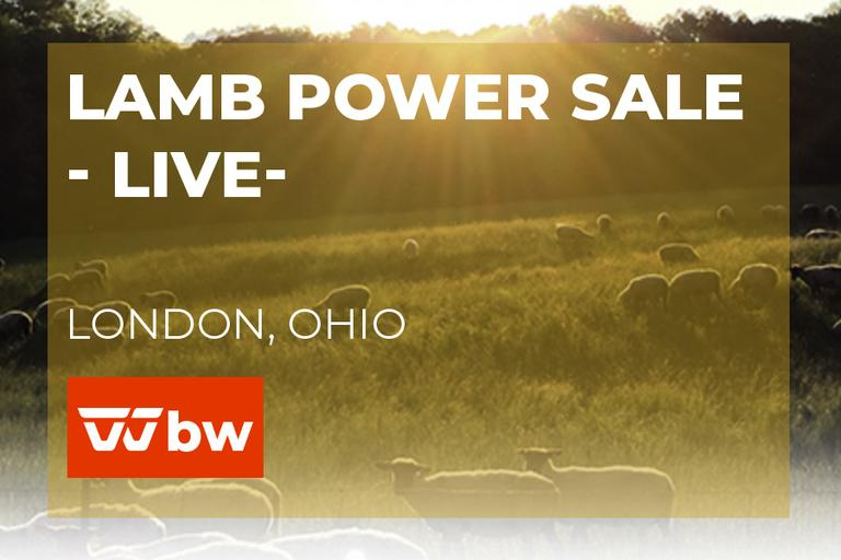 Lamb Power Sale - Live -Ohio